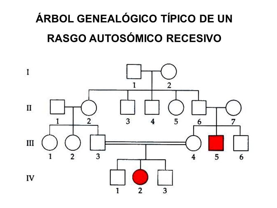 ÁRBOL GENEALÓGICO TÍPICO DE UN RASGO AUTOSÓMICO RECESIVO