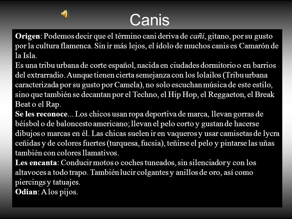 Canis Origen: Podemos decir que el término cani deriva de cañí, gitano, por su gusto por la cultura flamenca. Sin ir más lejos, el ídolo de muchos can