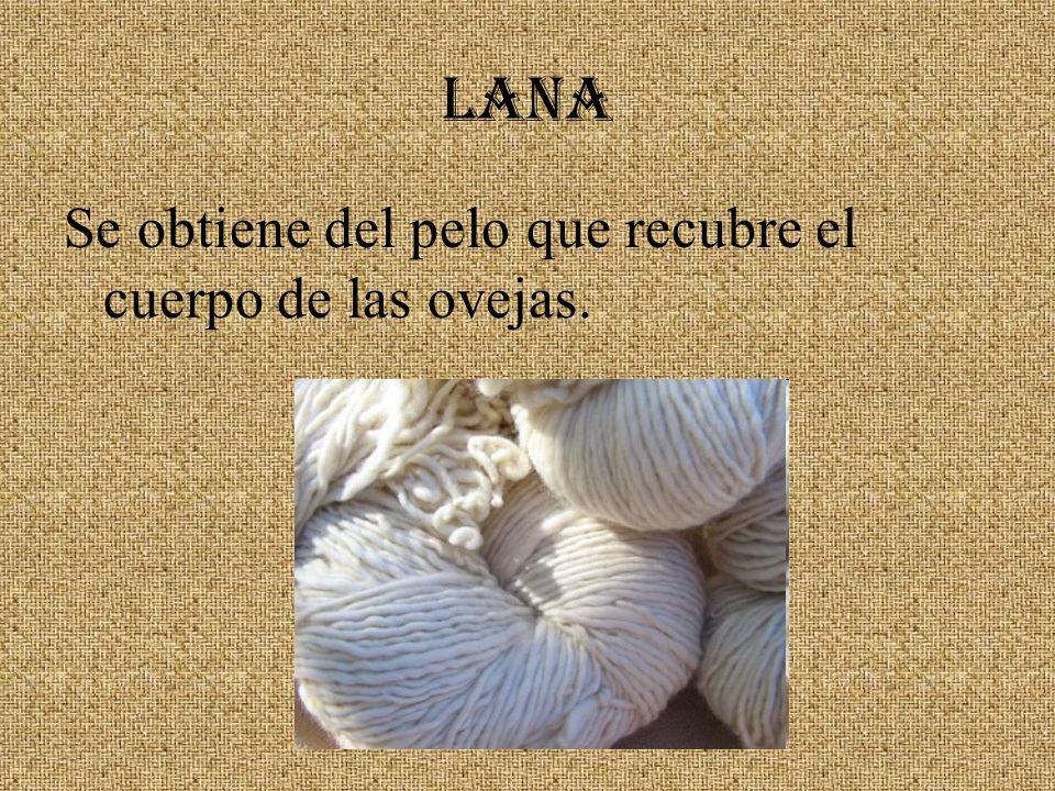 LANA Se obtiene del pelo que recubre el cuerpo de las ovejas.