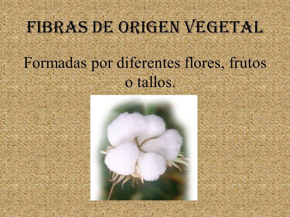 FIBRAS DE ORIGEN VEGETAL Formadas por diferentes flores, frutos o tallos.