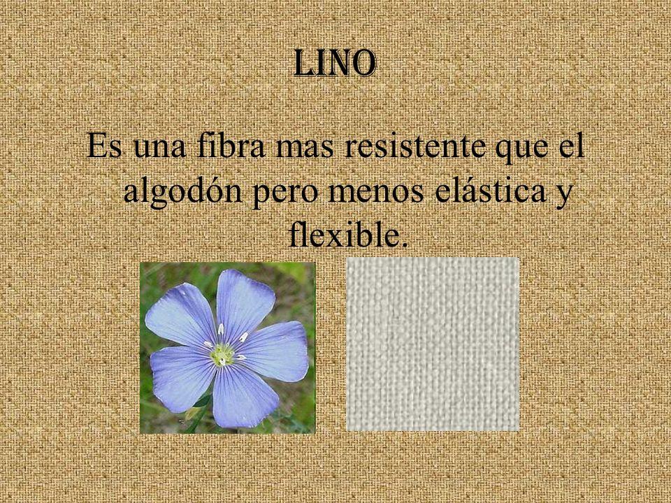 LINO Es una fibra mas resistente que el algodón pero menos elástica y flexible.