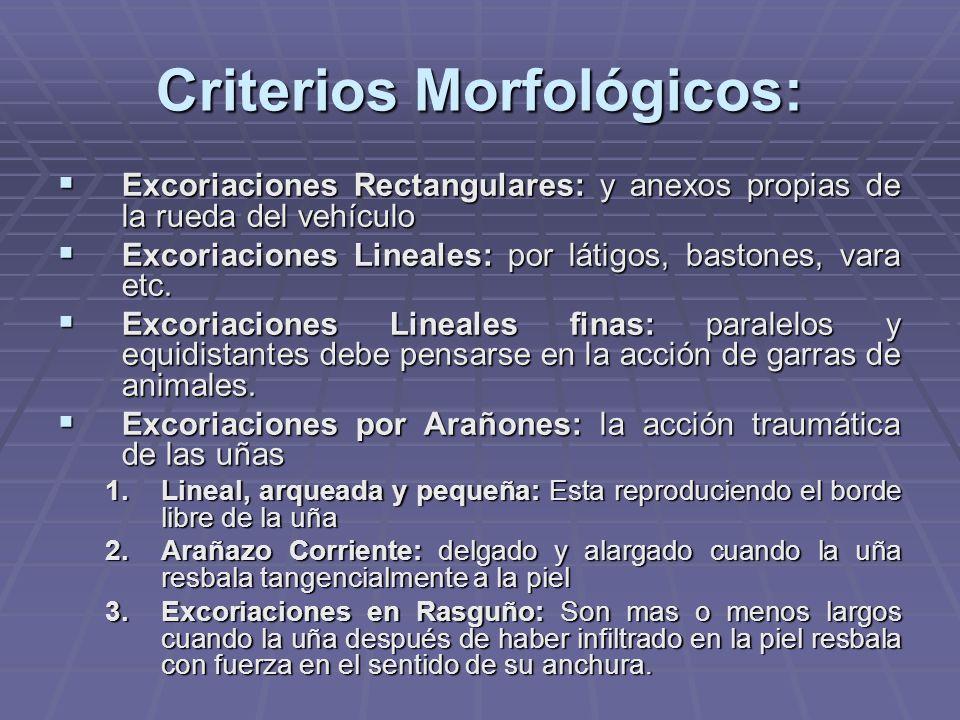 Criterios Morfológicos: Excoriaciones Rectangulares: y anexos propias de la rueda del vehículo Excoriaciones Rectangulares: y anexos propias de la rueda del vehículo Excoriaciones Lineales: por látigos, bastones, vara etc.