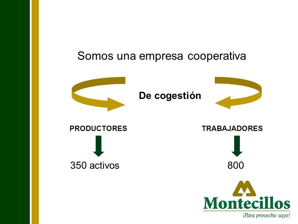 Somos una empresa cooperativa De cogestión PRODUCTORESTRABAJADORES 350 activos800