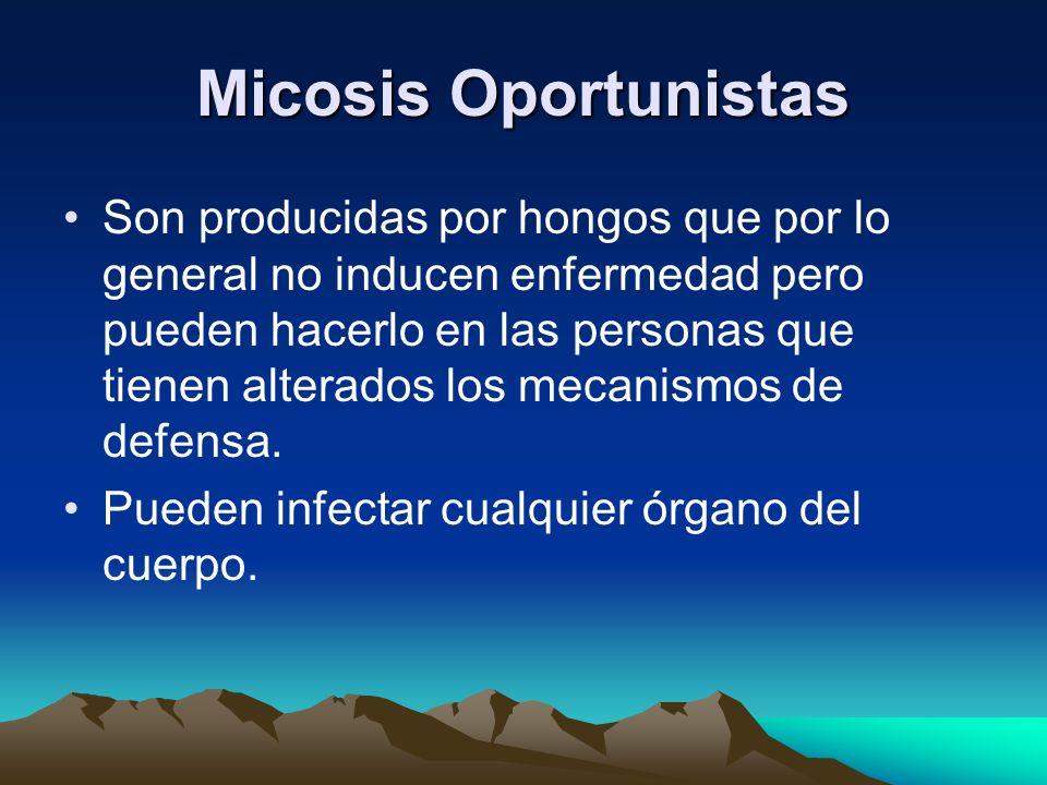 Micosis Oportunistas Son producidas por hongos que por lo general no inducen enfermedad pero pueden hacerlo en las personas que tienen alterados los m