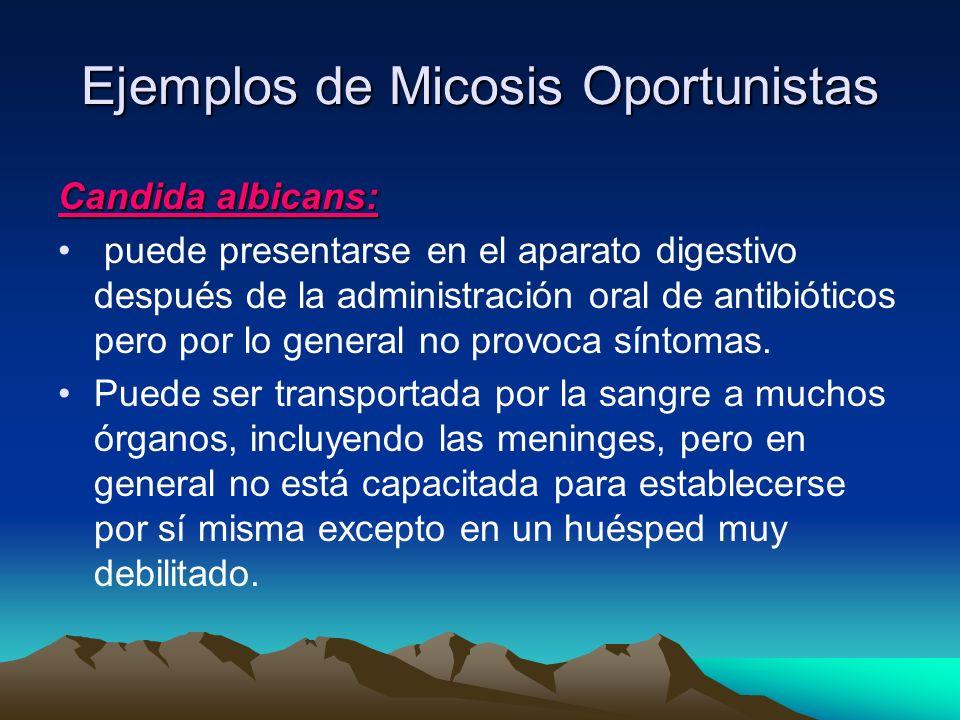 Ejemplos de Micosis Oportunistas Candida albicans: puede presentarse en el aparato digestivo después de la administración oral de antibióticos pero po