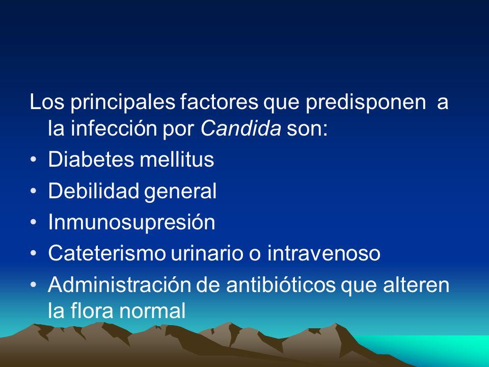 Los principales factores que predisponen a la infección por Candida son: Diabetes mellitus Debilidad general Inmunosupresión Cateterismo urinario o in