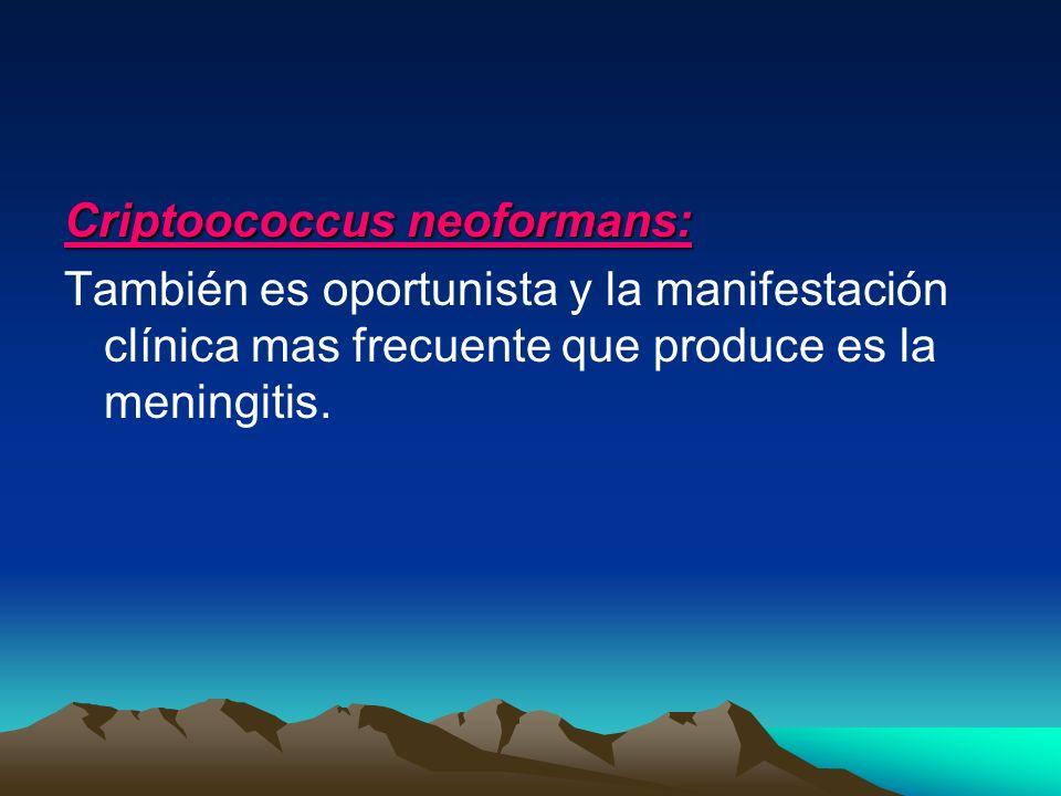 Criptoococcus neoformans: También es oportunista y la manifestación clínica mas frecuente que produce es la meningitis.