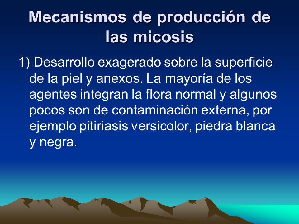 Mecanismos de producción de las micosis 1) Desarrollo exagerado sobre la superficie de la piel y anexos. La mayoría de los agentes integran la flora n