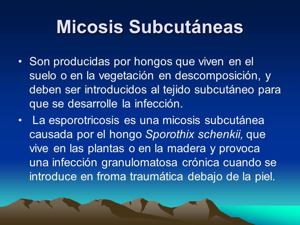 Micosis Subcutáneas Son producidas por hongos que viven en el suelo o en la vegetación en descomposición, y deben ser introducidos al tejido subcutáne