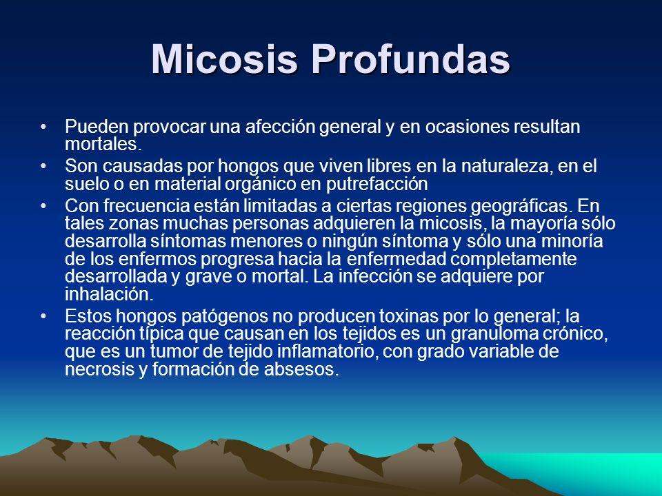 Micosis Profundas Pueden provocar una afección general y en ocasiones resultan mortales. Son causadas por hongos que viven libres en la naturaleza, en