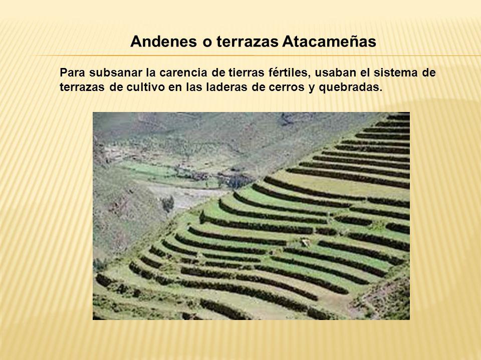Andenes o terrazas Atacameñas Para subsanar la carencia de tierras fértiles, usaban el sistema de terrazas de cultivo en las laderas de cerros y quebradas.