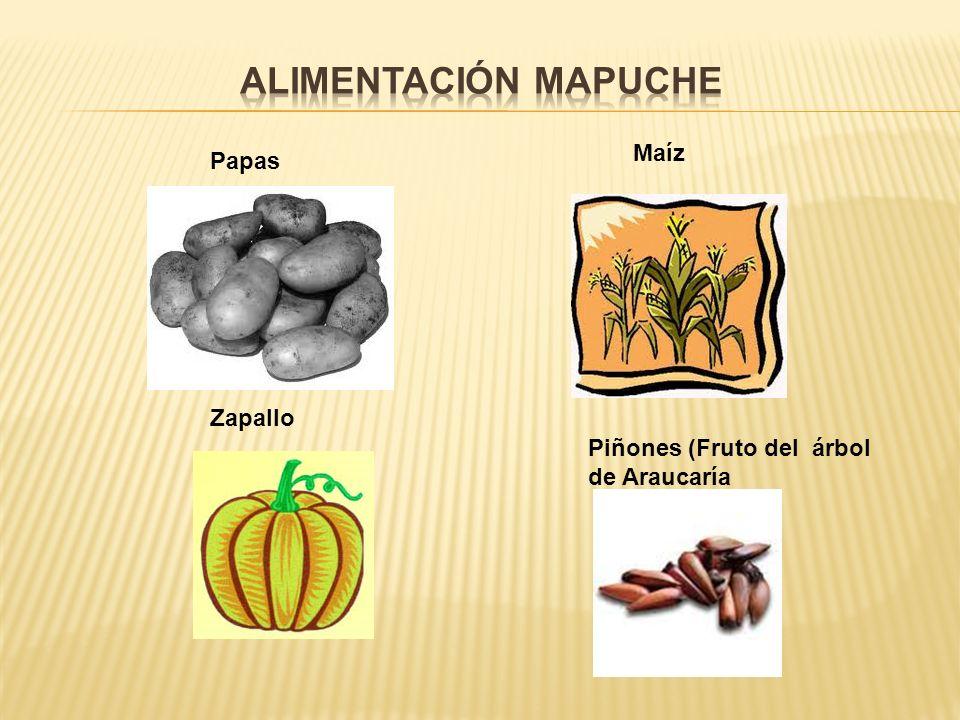 Papas Maíz Zapallo Piñones (Fruto del árbol de Araucaría
