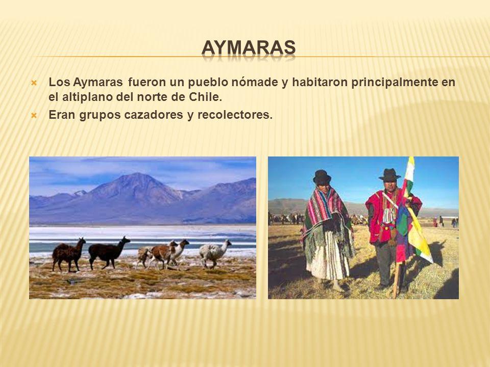 Los Aymaras fueron un pueblo nómade y habitaron principalmente en el altiplano del norte de Chile.