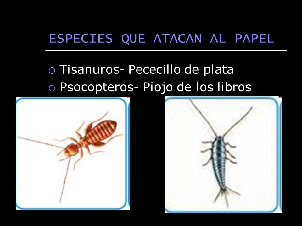 ESPECIES QUE ATACAN AL PAPEL Tisanuros- Pececillo de plata Psocopteros- Piojo de los libros