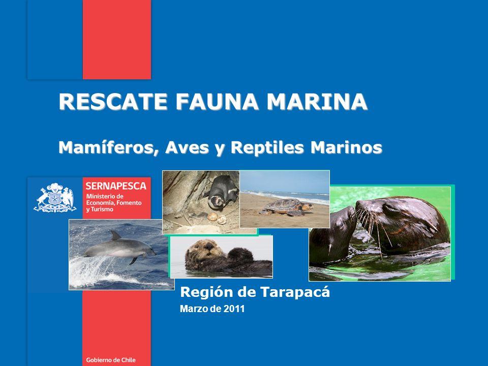 Mamíferos, Aves y Reptiles Marinos RESCATE FAUNA MARINA Región de Tarapacá Marzo de 2011