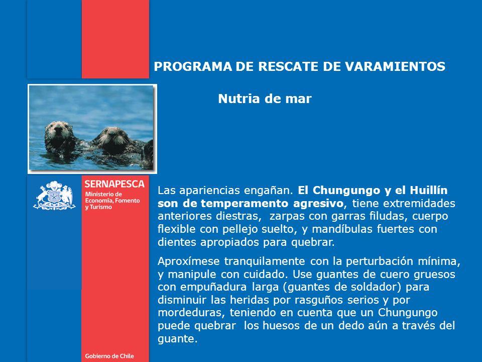 PROGRAMA DE RESCATE DE VARAMIENTOS Nutria de mar Las apariencias engañan.