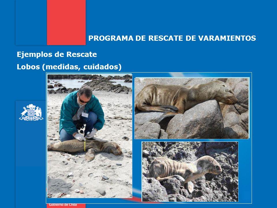 PROGRAMA DE RESCATE DE VARAMIENTOS Ejemplos de Rescate Lobos (medidas, cuidados)
