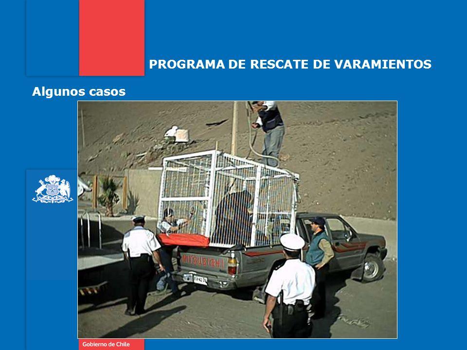 PROGRAMA DE RESCATE DE VARAMIENTOS Algunos casos