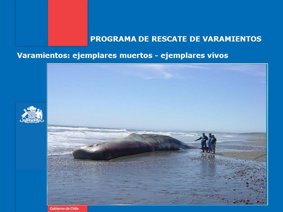 PROGRAMA DE RESCATE DE VARAMIENTOS Varamientos: ejemplares muertos - ejemplares vivos