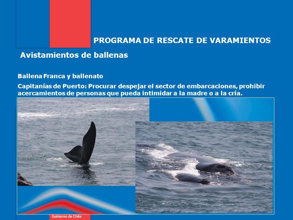 PROGRAMA DE RESCATE DE VARAMIENTOS Avistamientos de ballenas Ballena Franca y ballenato Capitanías de Puerto: Procurar despejar el sector de embarcaci