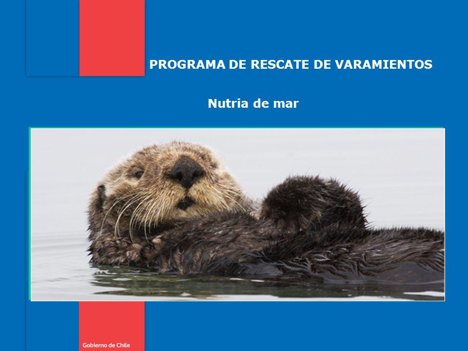 PROGRAMA DE RESCATE DE VARAMIENTOS Nutria de mar