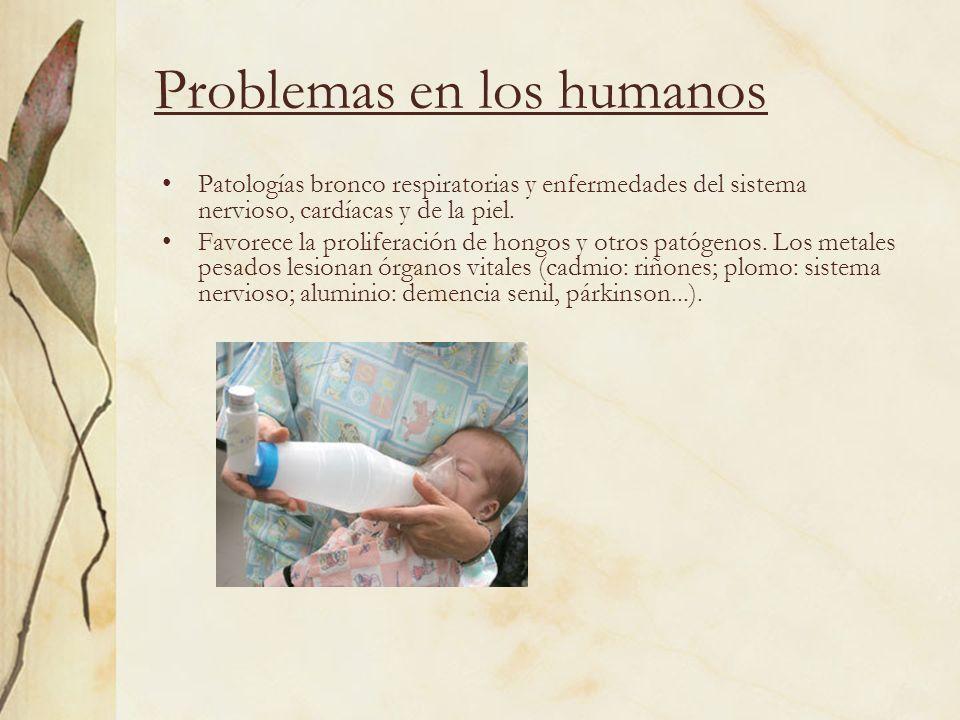 Problemas en los humanos Patologías bronco respiratorias y enfermedades del sistema nervioso, cardíacas y de la piel. Favorece la proliferación de hon