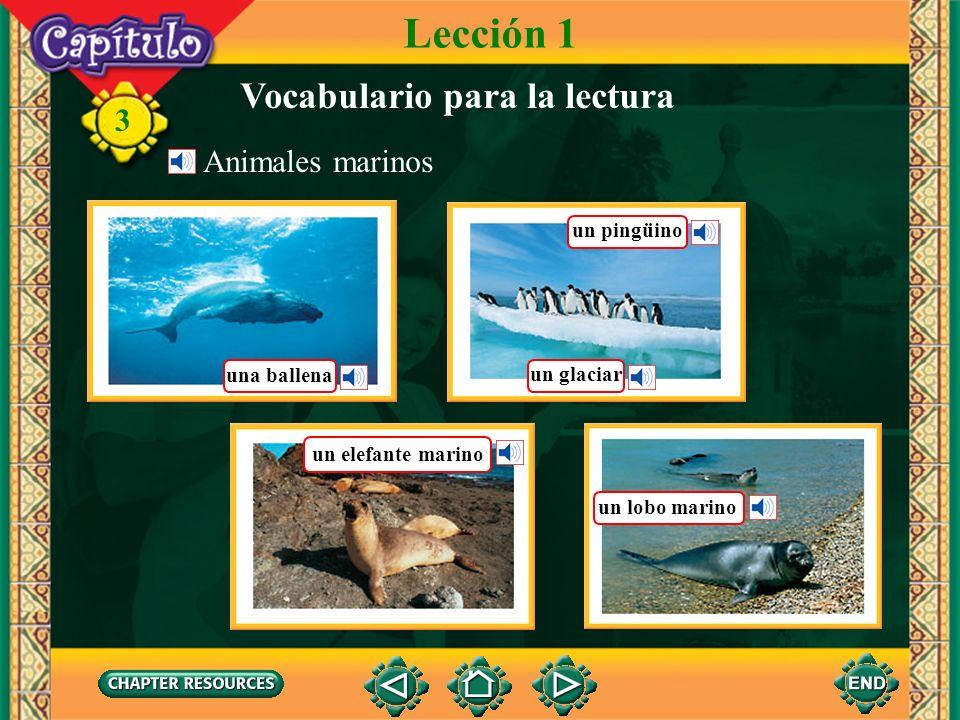 3 Vocabulario para la lectura Lección 1 Animales marinos una ballena un pingüino un glaciar un elefante marino un lobo marino