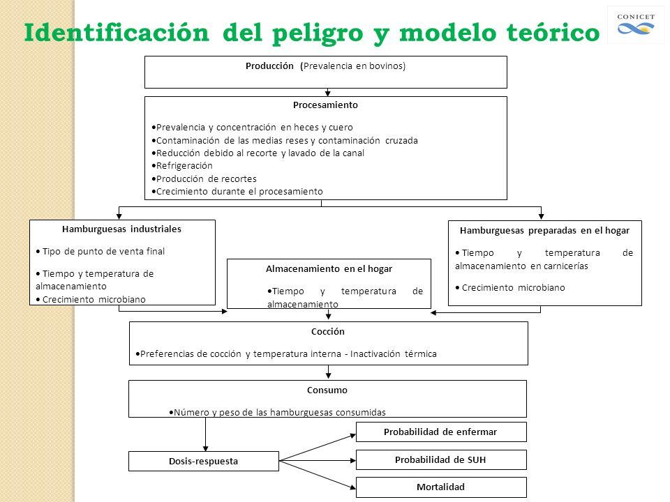 Producción (Prevalencia en bovinos) Procesamiento Prevalencia y concentración en heces y cuero Contaminación de las medias reses y contaminación cruza