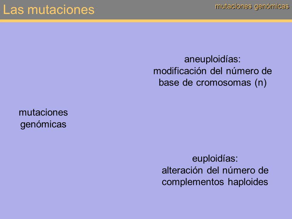 Las mutaciones mutaciones genómicas aneuploidías: modificación del número de base de cromosomas (n) mutaciones genómicas euploidías: alteración del nú