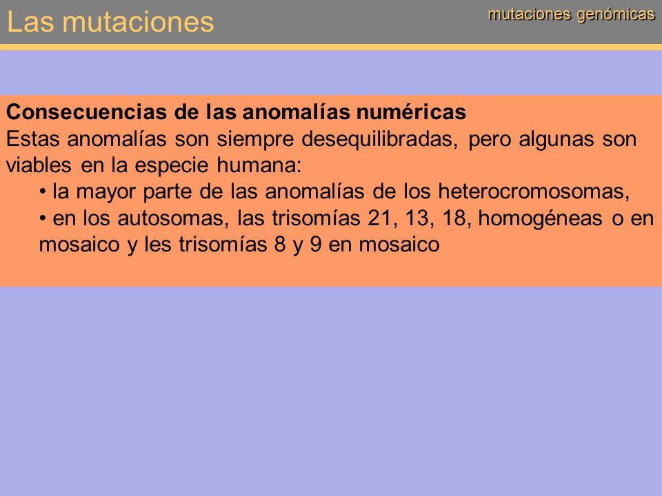 Las mutaciones mutaciones genómicas Consecuencias de las anomalías numéricas Estas anomalías son siempre desequilibradas, pero algunas son viables en