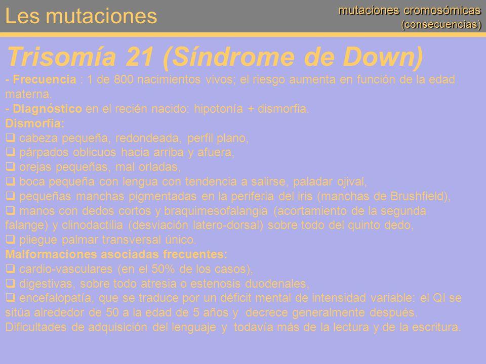 Les mutaciones mutaciones cromosómicas (consecuencias) Trisomía 21 (Síndrome de Down) - Frecuencia : 1 de 800 nacimientos vivos; el riesgo aumenta en