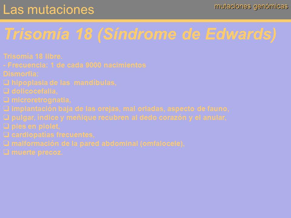 Las mutaciones mutaciones genómicas Trisomía 18 (Síndrome de Edwards) Trisomía 18 libre. - Frecuencia: 1 de cada 9000 nacimientos Dismorfia: hipoplasi