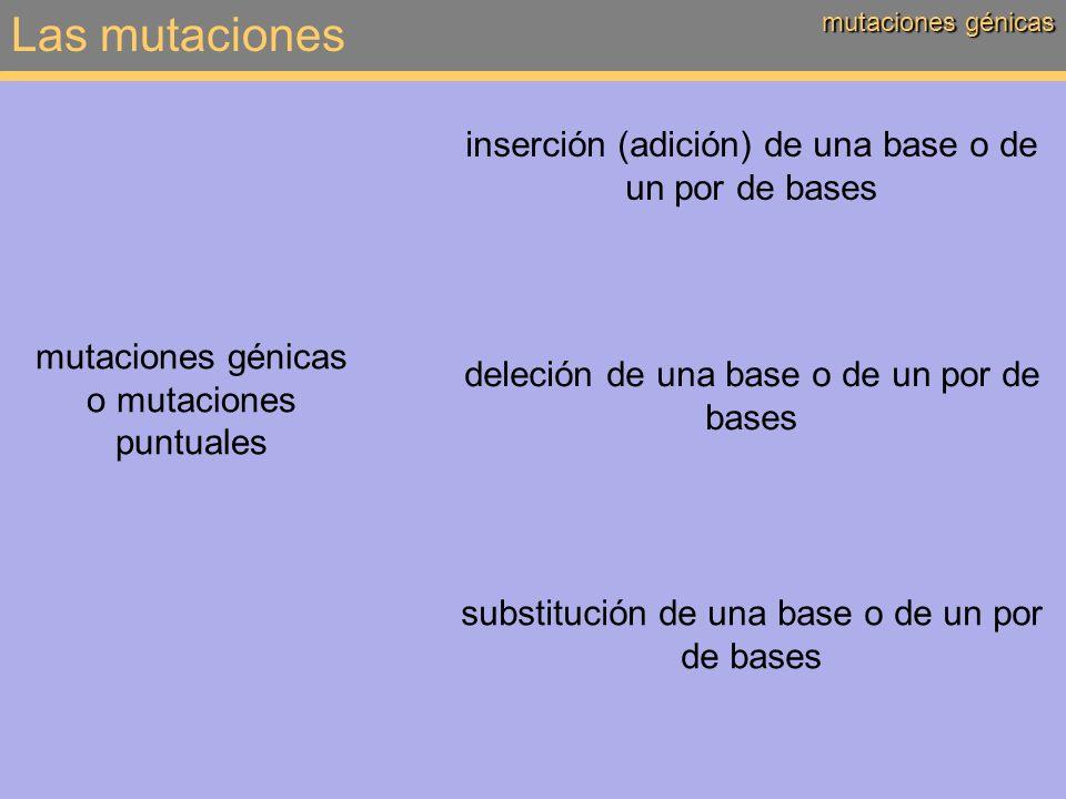 Las mutaciones mutaciones génicas: consecuencias sin cambio = mutación neutra o silenciosa consecuencias de las mutaciones génicas: nuevos alelos cambio de un aminoácido (proteína inactiva; activa en el caso de retromutación) cambio de todos los aminoácidos traducción interrumpida / codón STOP