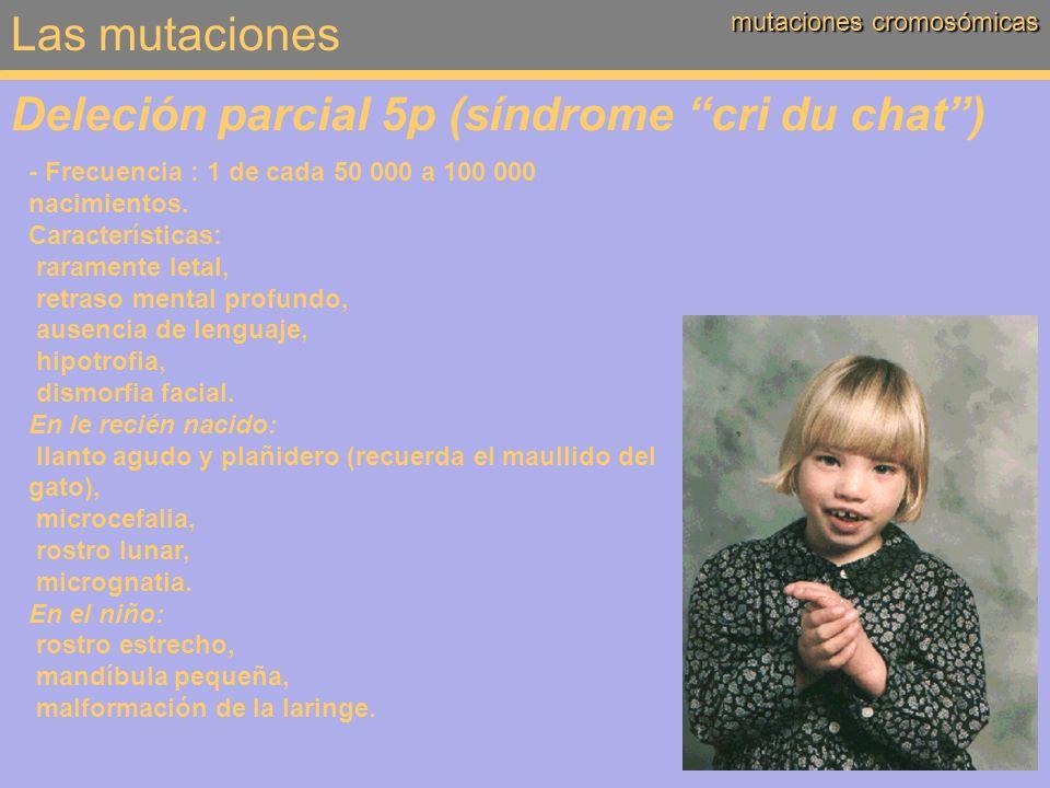 Las mutaciones mutaciones cromosómicas Deleción parcial 5p (síndrome cri du chat) - Frecuencia : 1 de cada 50 000 a 100 000 nacimientos. Característic