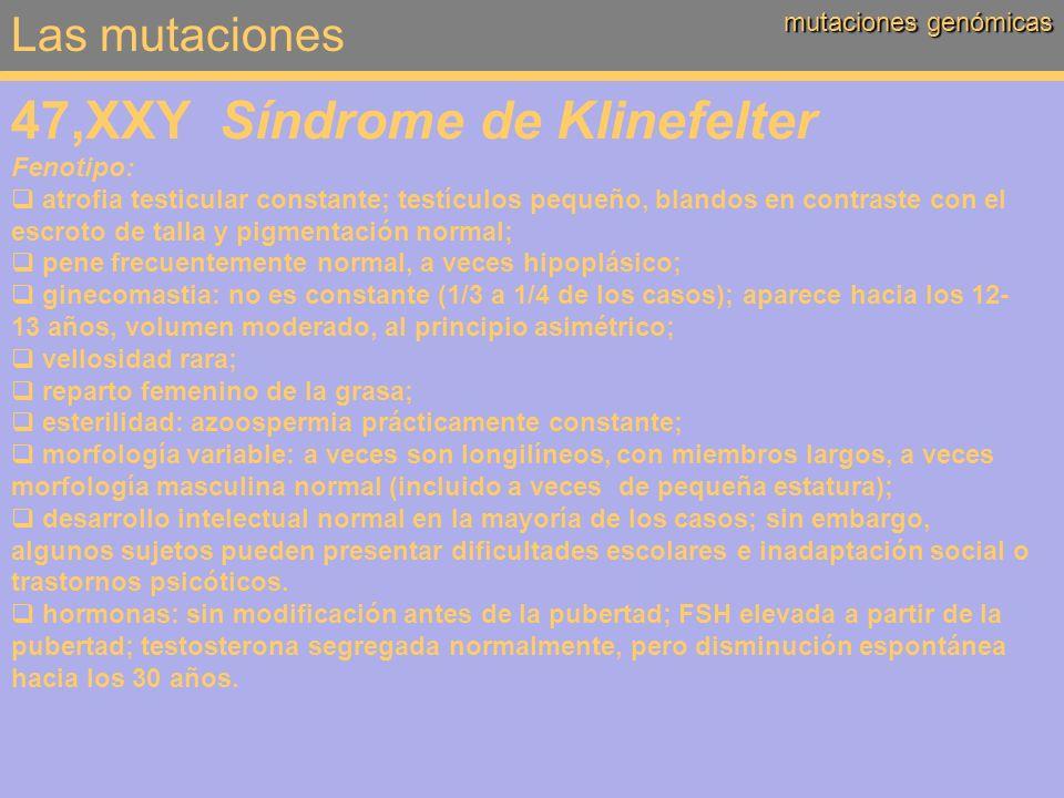 Las mutaciones mutaciones genómicas 47,XXY Síndrome de Klinefelter Fenotipo: atrofia testicular constante; testículos pequeño, blandos en contraste co