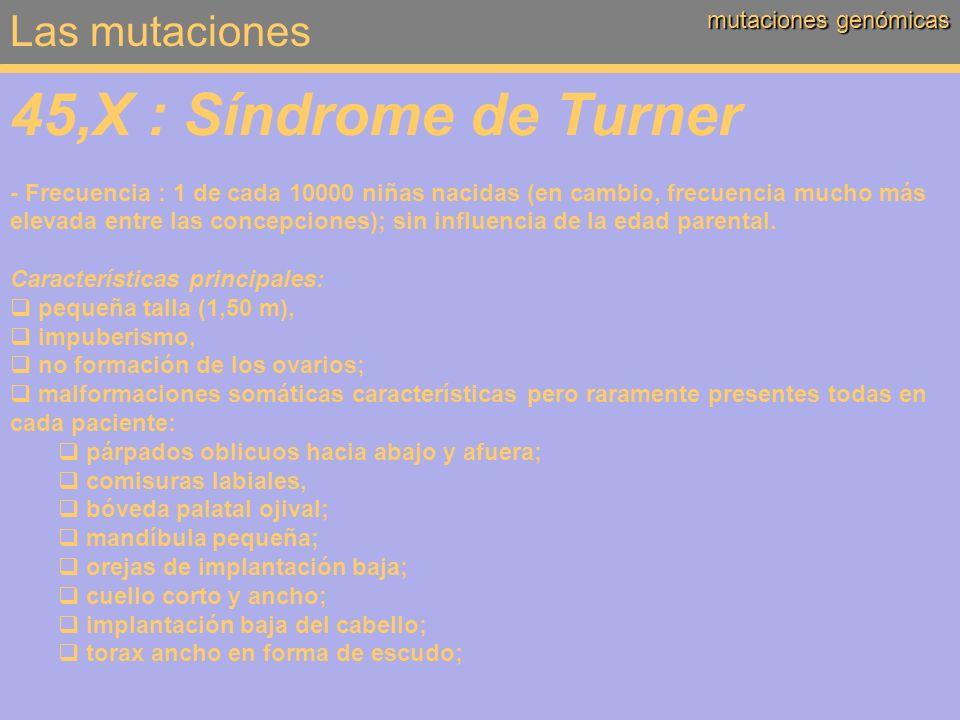 Las mutaciones mutaciones genómicas 45,X : Síndrome de Turner - Frecuencia : 1 de cada 10000 niñas nacidas (en cambio, frecuencia mucho más elevada en