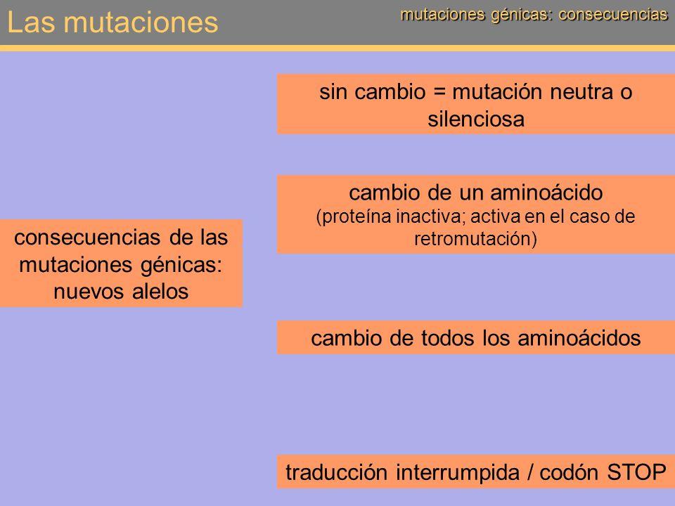 Las mutaciones mutaciones cromosómicas deleción: pérdida de un segmento, terminal o intercalar mutaciones cromosómicas (intra- o intercromosómicas) duplicación: repetición de un segmento, intra- o intercromosómico inversión: giro de 180° de un segmento translocación: desplazamiento de un segmento, intra- o intercromosómico