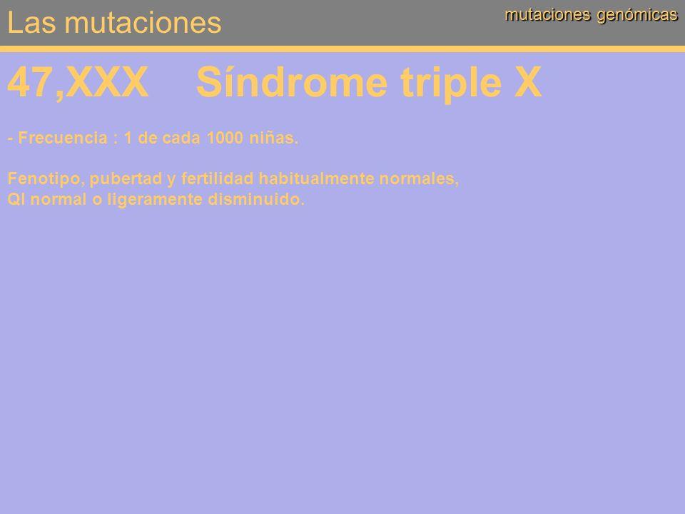 Las mutaciones mutaciones genómicas 47,XXX Síndrome triple X - Frecuencia : 1 de cada 1000 niñas. Fenotipo, pubertad y fertilidad habitualmente normal
