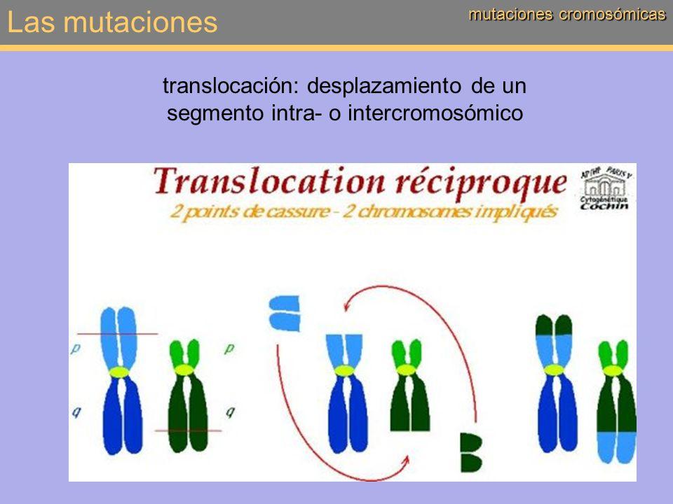 Las mutaciones mutaciones cromosómicas translocación: desplazamiento de un segmento intra- o intercromosómico