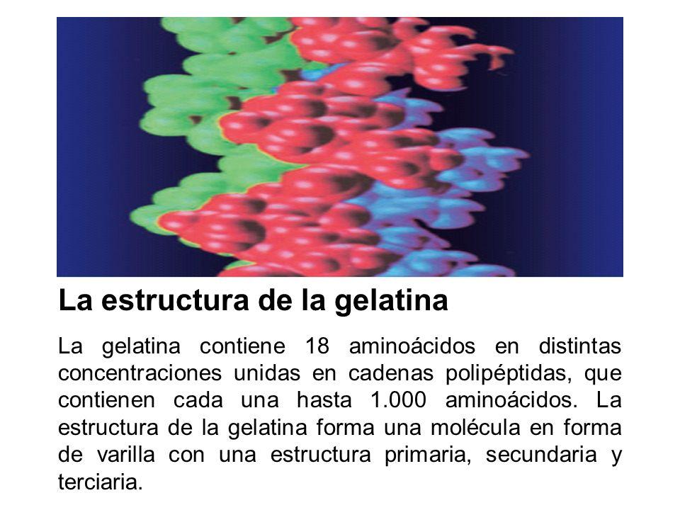 La estructura de la gelatina La gelatina contiene 18 aminoácidos en distintas concentraciones unidas en cadenas polipéptidas, que contienen cada una h