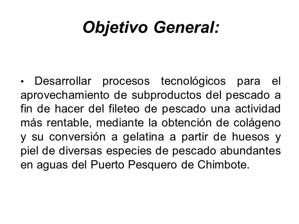 Objetivo General: Desarrollar procesos tecnológicos para el aprovechamiento de subproductos del pescado a fin de hacer del fileteo de pescado una acti