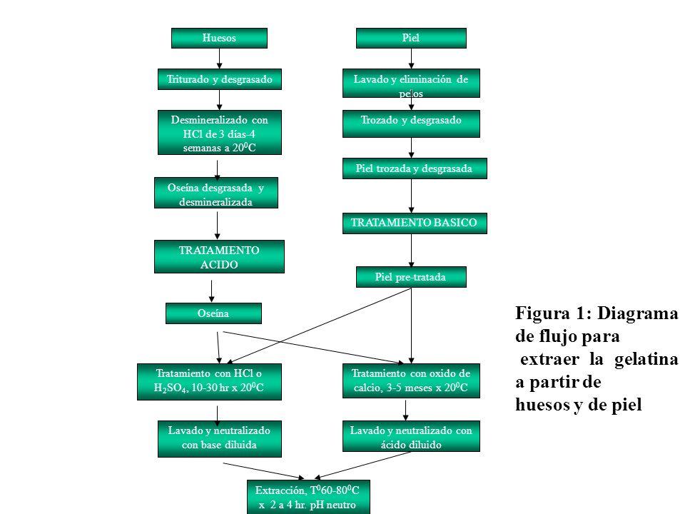 HuesosPiel Triturado y desgrasadoLavado y eliminación de pelos Desmineralizado con HCl de 3 días-4 semanas a 20 0 C Trozado y desgrasado Oseína desgra