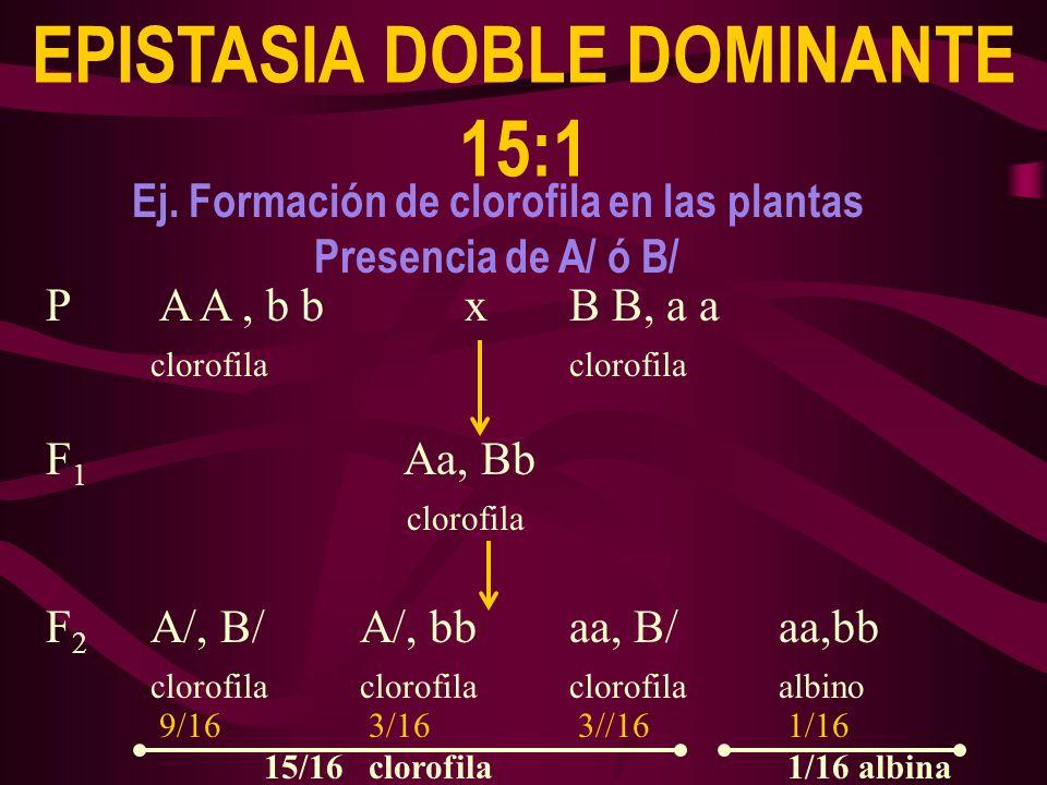 P A A, b b xB B, a aclorofila F 1 Aa, Bb clorofila F 2 A/, B/A/, bbaa, B/aa,bb clorofilaclorofilaclorofilaalbino EPISTASIA DOBLE DOMINANTE 15:1 9/163/