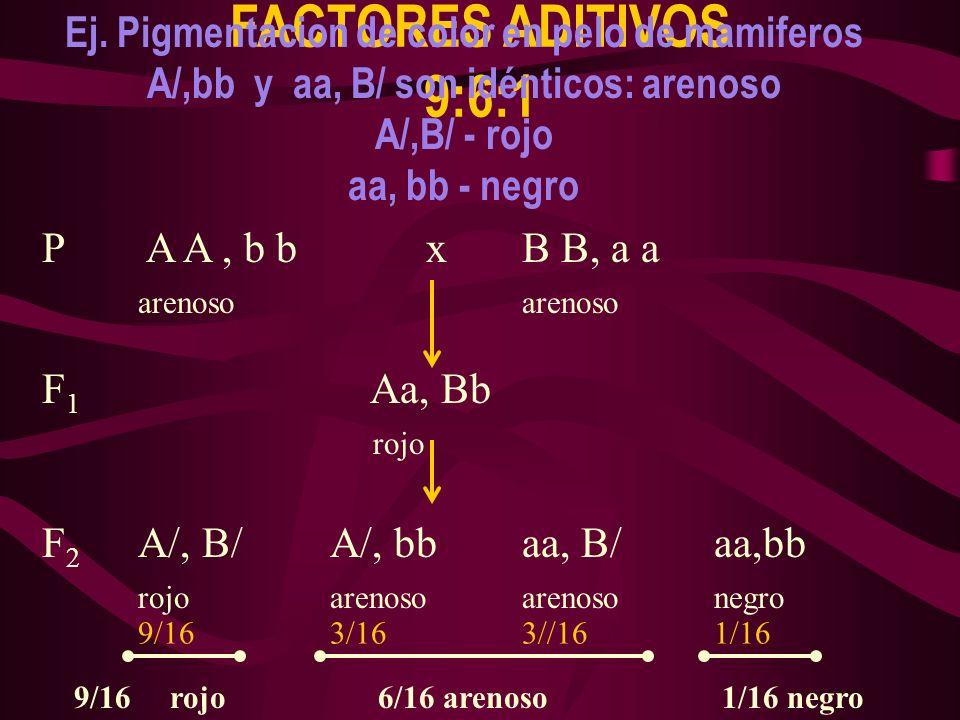 FACTORES ADITIVOS 9:6:1 Ej. Pigmentacion de color en pelo de mamiferos A/,bb y aa, B/ son idénticos: arenoso A/,B/ - rojo aa, bb - negro P A A, b b xB