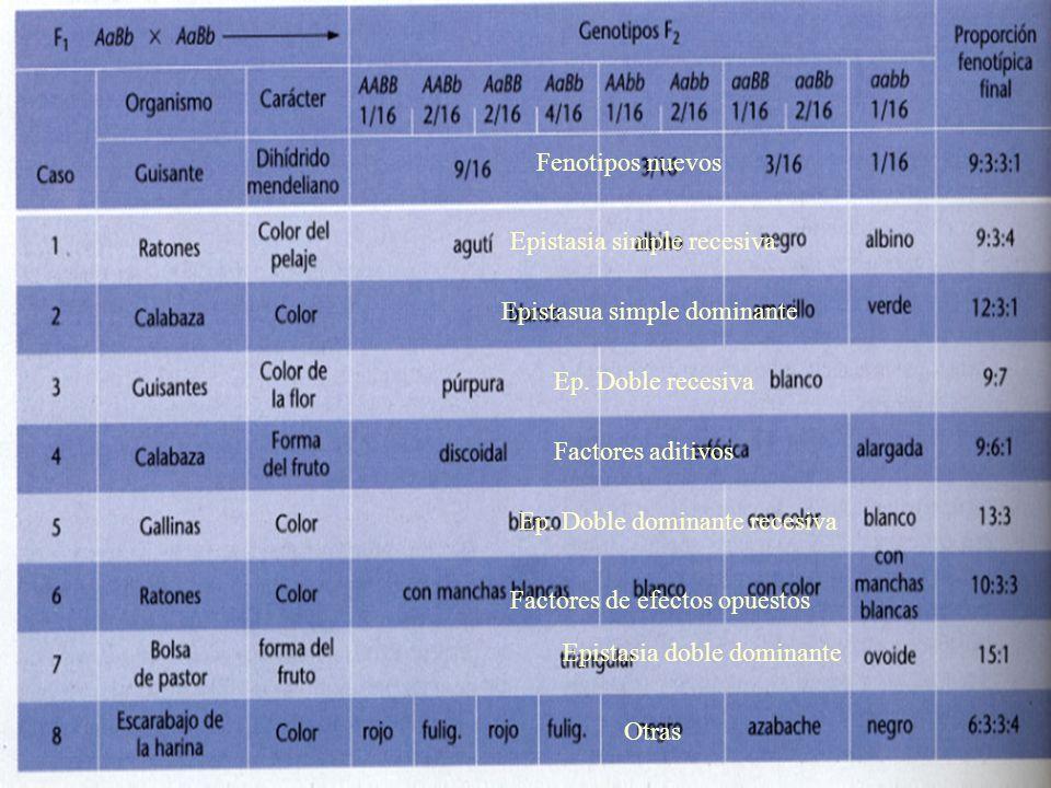 Fenotipos nuevos Epistasia simple recesiva Epistasua simple dominante Ep. Doble recesiva Factores aditivos Ep. Doble dominante recesiva Epistasia dobl