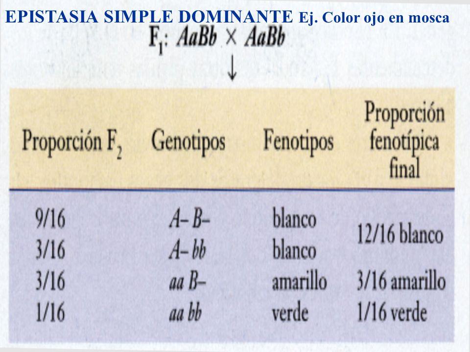 EPISTASIA SIMPLE DOMINANTE Ej. Color ojo en mosca