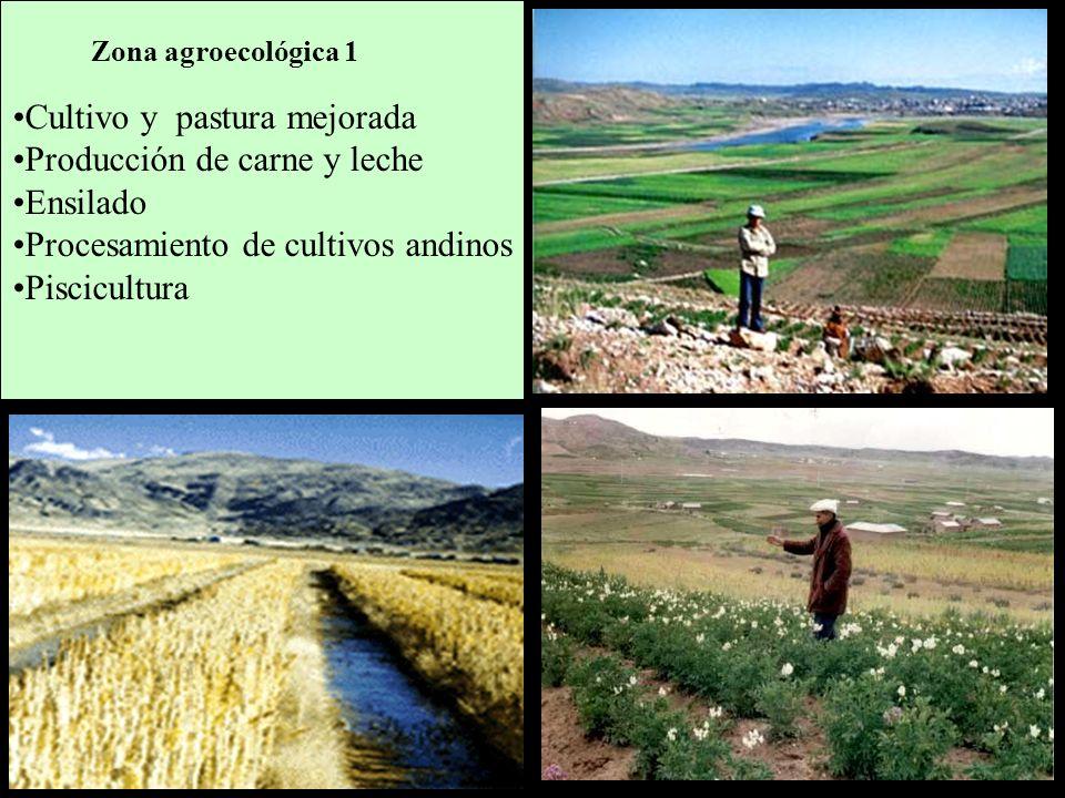 Cultivo y pastura mejorada Producción de carne y leche Ensilado Procesamiento de cultivos andinos Piscicultura Zona agroecológica 1