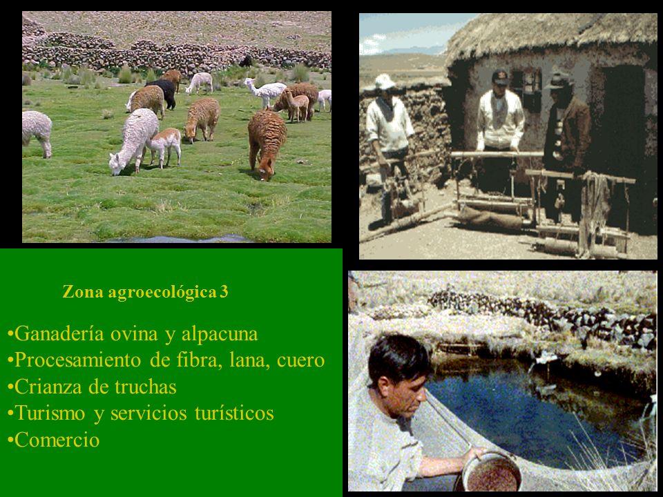 Ganadería ovina y alpacuna Procesamiento de fibra, lana, cuero Crianza de truchas Turismo y servicios turísticos Comercio Zona agroecológica 3