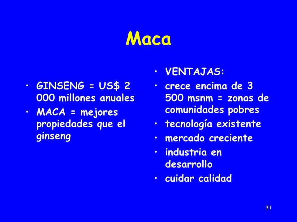31 Maca GINSENG = US$ 2 000 millones anuales MACA = mejores propiedades que el ginseng VENTAJAS: crece encima de 3 500 msnm = zonas de comunidades pobres tecnología existente mercado creciente industria en desarrollo cuidar calidad