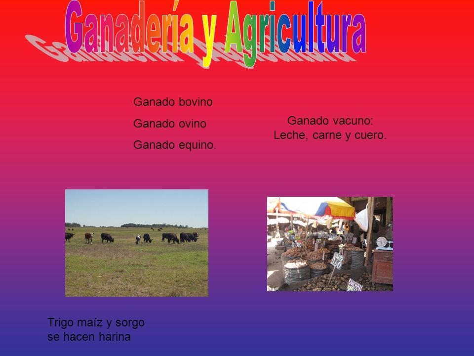 Ganado bovino Ganado ovino Ganado equino. Ganado vacuno: Leche, carne y cuero. Trigo maíz y sorgo se hacen harina